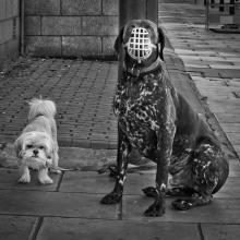 Denis & Margaret Thatcher